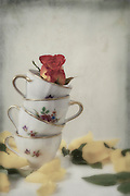 four vintage cups with a rose