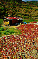 Chilies drying on rooftop on road between Paro and Thimphu, Bhutan