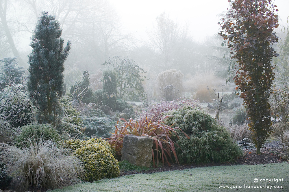 A cold foggy morning by the pond in John Massey's garden. The columnar shape of Fagus sylvatica 'Dawyck' (Beech) on the right. Phormium 'Jester' with conifers and grasses