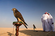 United Arab Emirates: Abu Dhabi Province.A group of young Emirati men gather to drink tea and train their falcons in the desert