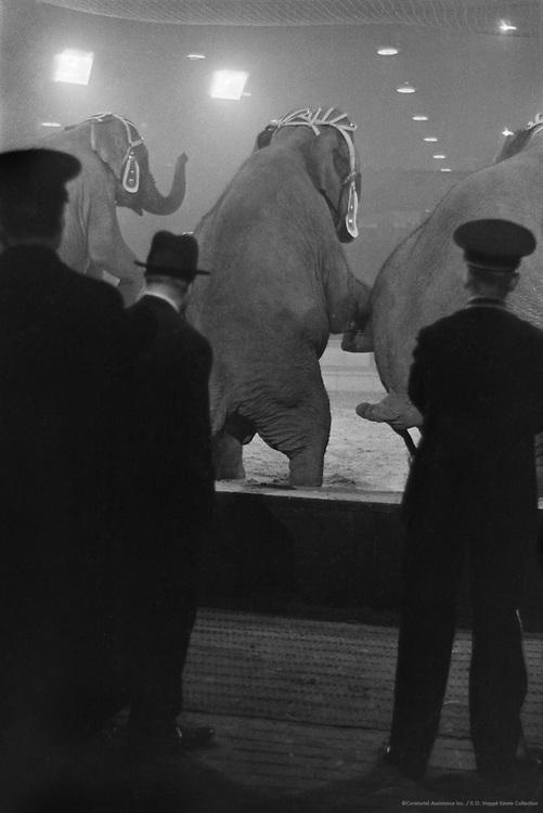 Elephants, Hagenbeck Circus, London, England, 1935