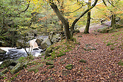 Burbage Brook flows through the autumn woodland and rocky river valley of Padley Gorge, Longshaw Estate, Peak District, Derbyshire, UK