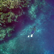 Diving and Family Trip to Roatan, Honduras