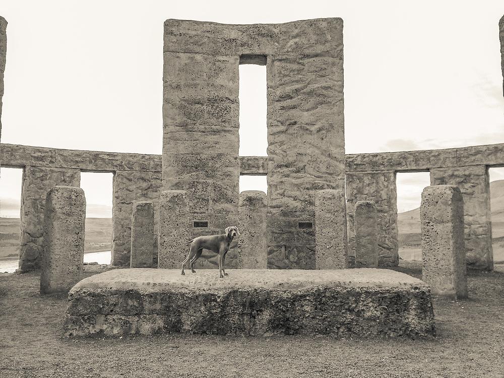 Sugar on the sacrificial altar at Maryhill Stonehenge