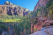 Zion Canyon, Fall Colors, Emerald Pool trail, Zion National Park