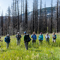 hikers in a mountain meadow in the badger two medicine below badger cabin
