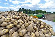 Nederland, Kekerdom, 10-8-2016 Aardappeloogst in de Ooijpolder. Oogst van de vroege soort Sinora . Nadat de aardappels uit de grond zijn gehaald lost de trekker ze in een schudmachine die de klei er een beetje afhaald. Groter kleibrokken worden er uit gevist waarna de piepers via de band in een vrachtwgen verdwijnen. Die brengt ze naar de fabriek waar ze verwerkt worden tot friet, frites, en chips Foto: Flip Franssen