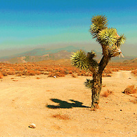 Remote desert location in USA with cactus