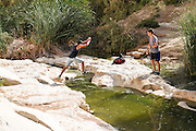 Ein Avdat, sweet water spring in the negev desert, israel near Kibbutz Sde Boker
