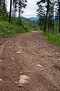 Dirt road on a forested hillside on Canfield Mountain, North Idaho. . PLEASE CONTACT US FOR DIGITAL DOWNLOAD AND PRICING.