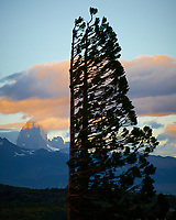 Wind blown trees near Estancia Helsingfors in Patagonia at sunset (Fitz Roy in the ground). Image taken with a Nikon D3x camera and 70-300 mm VR lens (ISO 100, 180 mm, f/11, 1/60 sec).