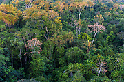 The magnificent canopy of the Amazon rainforest in Mato Grosso, Brazil.