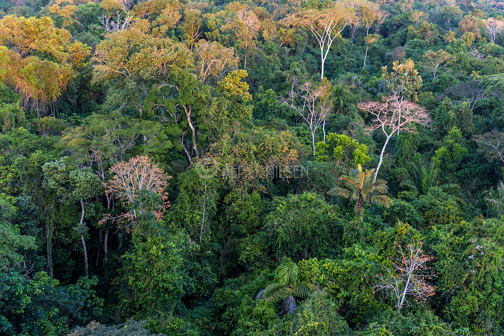 The magnificent canopy of the Amazon rainforest in Mato Grosso, Brazil.