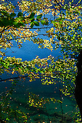 Lake surface viewed through curtain of autumn leaves. Plitvice National Park, Croatia