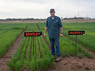 2019 Wheat Variety Trial Setup