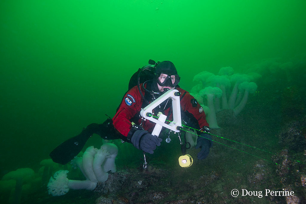 Bryan McNeil of Seattle Aquarium uses a green laser measurement tool to estimate the size of six gill sharks in Barkley Sound, Vancouver Island, BC, Canada MR 462