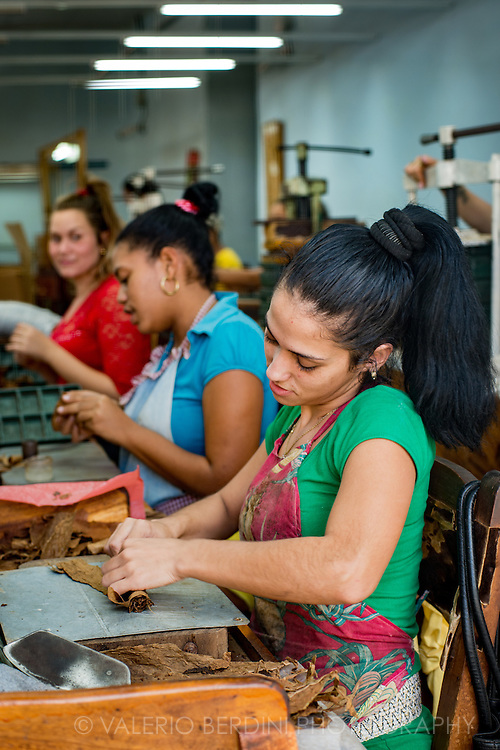 Three women work at their desk in a tobacco factory in Santa Clara, Cuba.