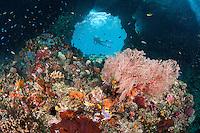 A Diver takes in the incredible scene at Bo'o Windows, Raja Ampat<br /> <br /> Shot in Indonesia