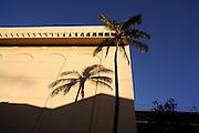 Palm tree shadow on wall. Waikiki, Hawaii