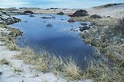 Interdunal swale -vernal pool in dunes; MA, Cape Cod