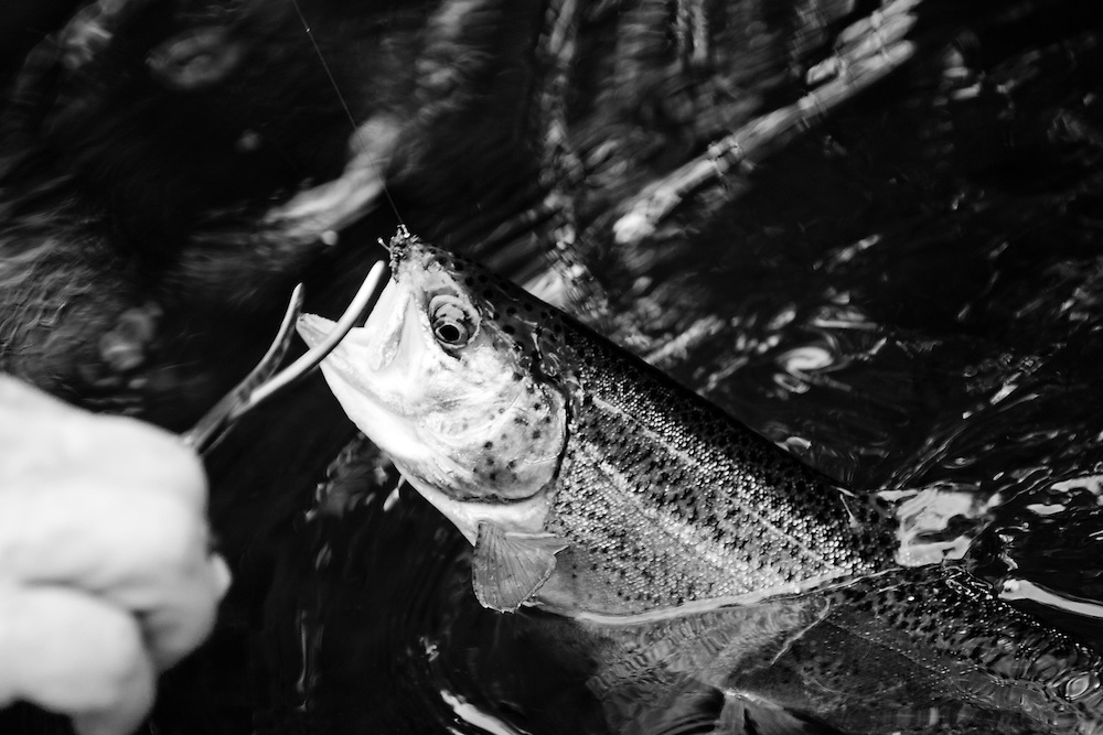 Zanesfield Rod & Gun Club, Zanesfield, OH, rainbow trout
