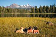 USA, Oregon, Lane  County, Willamette National Forest,Scott LakeUSA, Oregon, Lane  County, Willamette National Forest,Scott Lake,couple with dog tanning at lake<br /> <br /> <br /> <br /> MR  0514, 0515