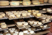 various cheeses in the maturing and storage room of a small organic sheep farm France
