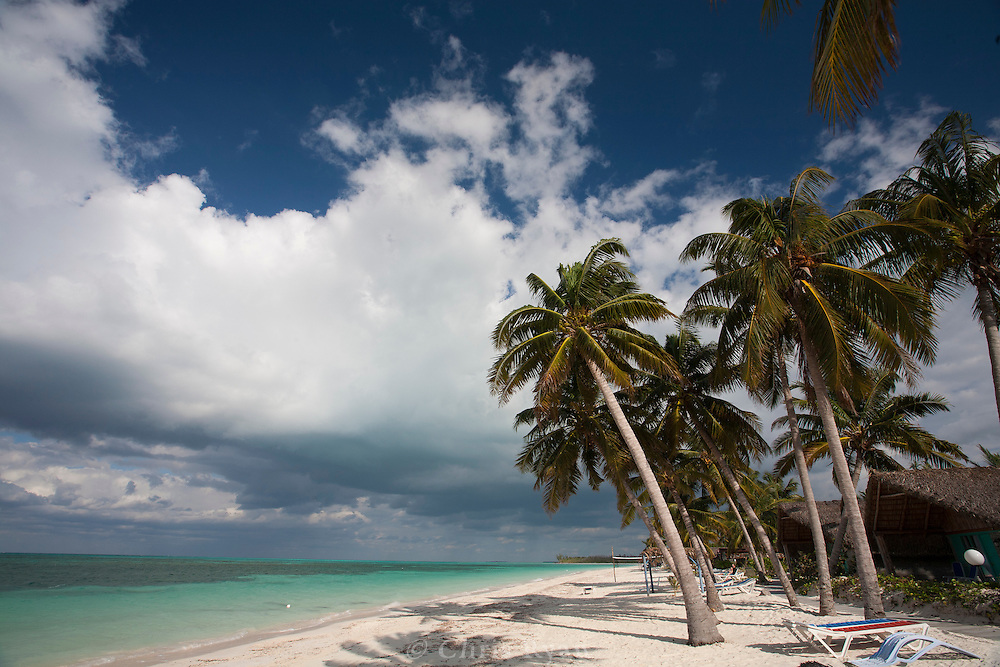 Palm trees on beach on Cayo Levisa, Cuba