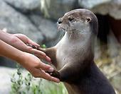 New Otter Exhibit