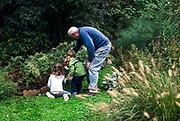 Senior man picks berries in the garden with his grand children.