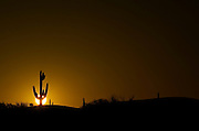 Saguaro Cactus at Sunrise - Phoenix - Arizona