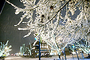 (winter's fall)  --  A few remaining brown maple leaves cling to the tree, collecting winter's falling snow flakes after midnight at the corner of First Avenue and Main Street.        (12/14/07)        MZ Photo Scenic image from the Walla Walla Valley. Fall color and leaves, spring flowers, winter snow, and summer sun.