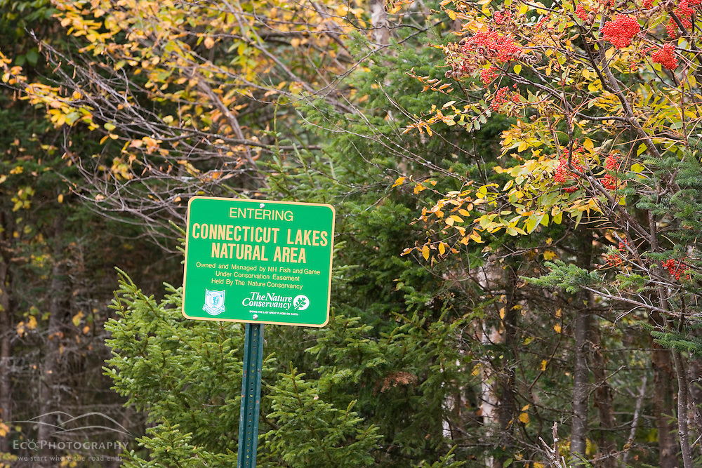 Connecticut Lakes Natural Area near Scott's Bog in Pittsburg, New Hampshire.