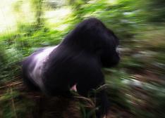 Rwanda #3 2013