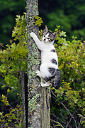 White and tabby kitten climbing tree