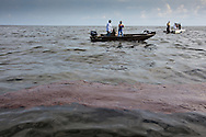 A team from the Sierra Club finds BP oil from the spill on the surface of Barataria Bay 45 day after the spill began.