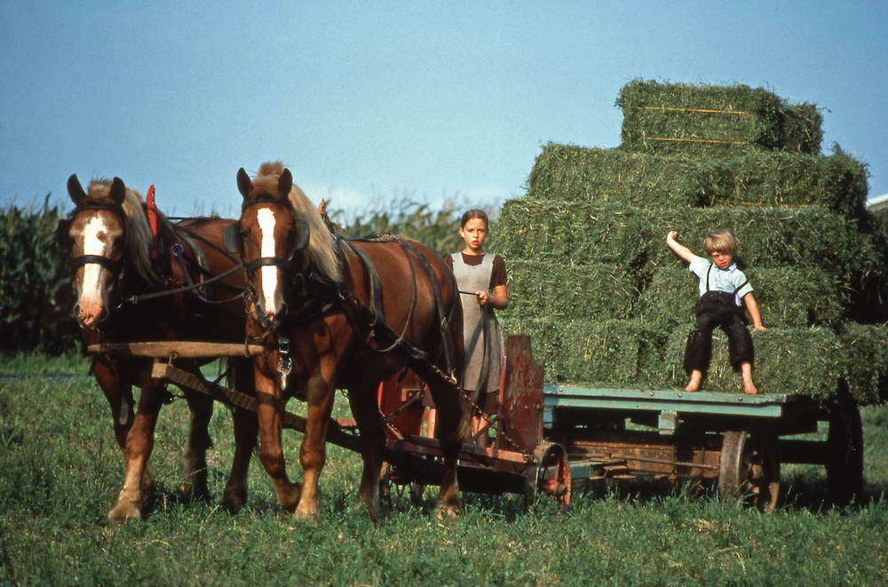 Amish children take in hay with mules, Lancaster, PA