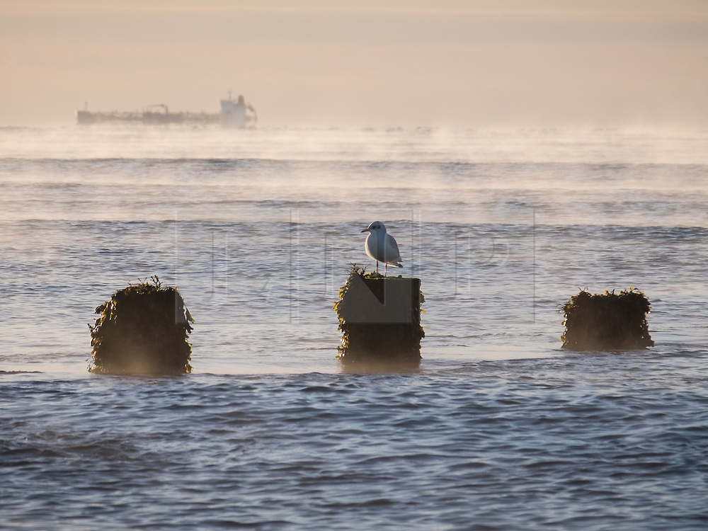 © Licensed to London News Pictures. 23/09/2016. Sandown, Isle of Wight, UK.  A black-headed gull sitting on a breakwater as mist moves over Sandown Bay on the Isle of Wight this morning, 23rd September 2016. The day has started cool, but fine and sunny. It will become a little cloudier and breezier later in the South East of England. Photo credit: Rob Arnold/LNP