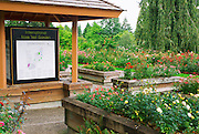 The International Rose Test Garden, Washington Park, Portland, Oregon