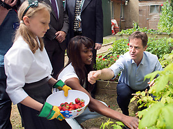 ***EMBARGO 12.01AM Tuesday 17 June.*** © Licensed to London News Pictures. 12/06/2014. Wallington, UK. Lorraine Pascale and Nick Clegg pick strawberries and raspberries with the children before making a fruit salad.  Ahead of an announcement on new food standards for schools, Deputy Prime Minister Nick Clegg and celebrity chef Lorraine Pascale visit Foresters Primary School where they picked fruit with schoolchildren from the school's vegetable patch, prepared a fruit salad, helped the school chefs to serve food and sat with the children as they ate lunch. Photo credit : Stephen Simpson/LNP