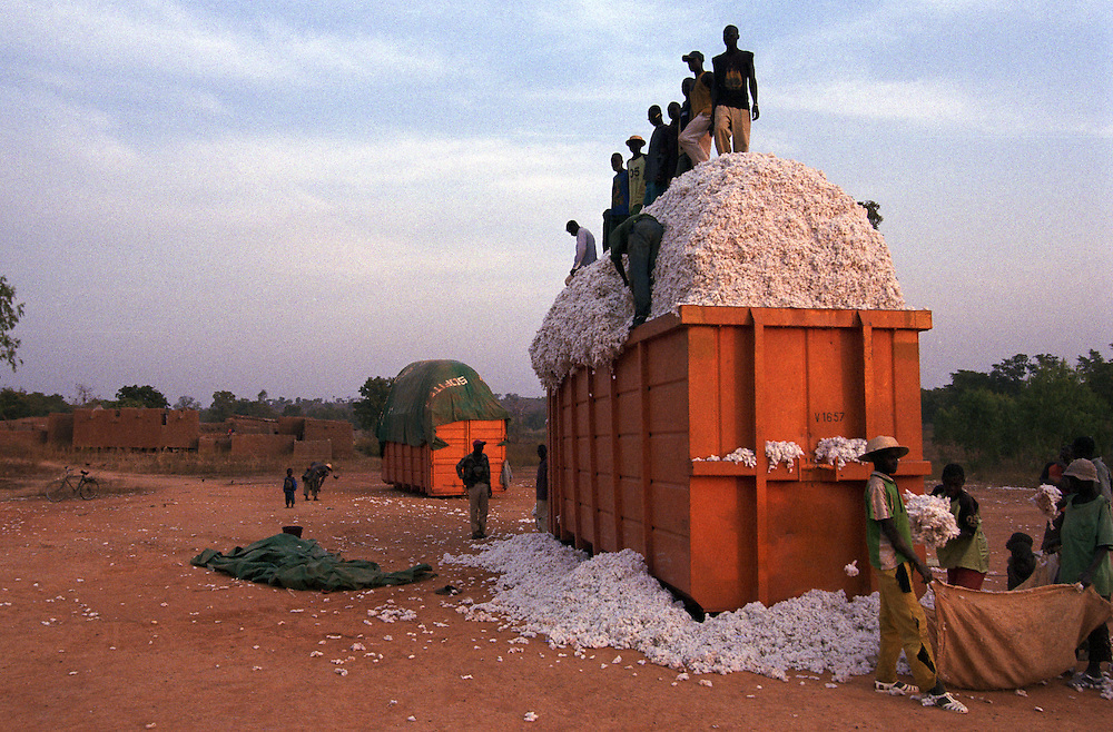 Cotton is packed into a container that will be picked up by a truck and taken to a Sofitex processing factory..Pad?ma, Burkina Faso. 15 December 2003..Photo © J.B. Russell
