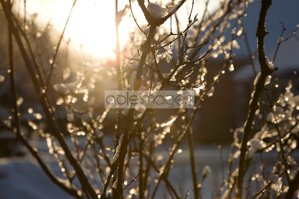 Close up of tree branches with snow and icicles