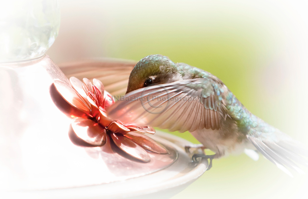 Extreme close-up of a small hummingbird at a copper feeder; providing the bird with a reliable source of energy.