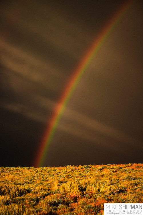 Rainbow, sun rays, and dark storm clouds over the Owyhee Desert, with colorful sagebrush in the foreground.