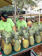 USA: Florida: Sarasota County: Sarasota: Kinsey's Produce display of pineapples at Sarasota Farmer's Market in downtown Sarasota. iPhone photo.
