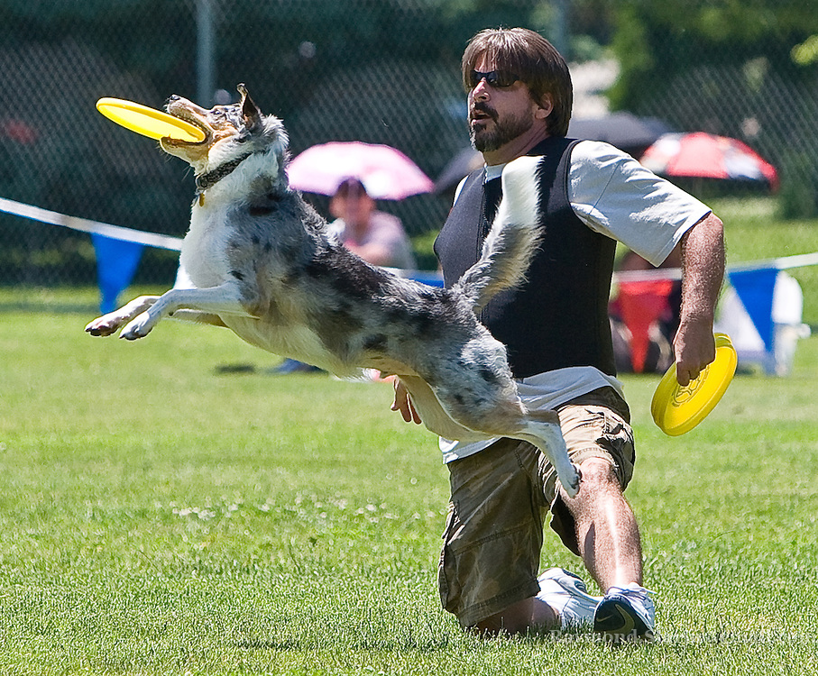During the freestyle frisbee tournament, owners and their dogs perform acrobatic stunts to show who can catch the frisbee with greatest style.