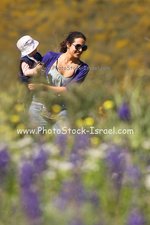 A two year old toddler and mother in a field of Blue lupin (Lupinus pilosus) flowers