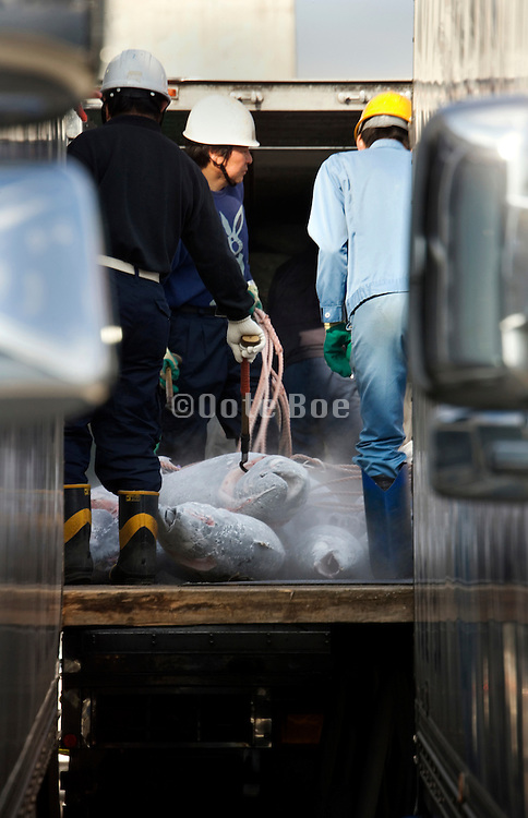 deep frozen Tuna being loaded on to a truck Japan