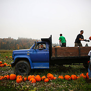 From left, Tyler Minette, Marcus McAulliffe, Nick Lathrop, Grant Harper and Scott Smith toss harvested pumpkins into a truck at Bob's Corn Farm in Snohomish County. The popular destination farm, known for its corn maze, and pumpkin patches, also has a small country store.  (Joshua Trujillo, seattlepi.com)