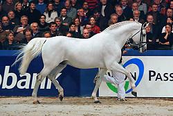 Celano<br /> KWPN Hengstenkeuring - 's Hertogenbosch 2008<br /> Photo © Hippo Foto